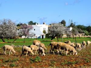 Primavera en Ibiza
